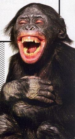 Mes amis les singes et lemuriens - Petit singe rigolo ...